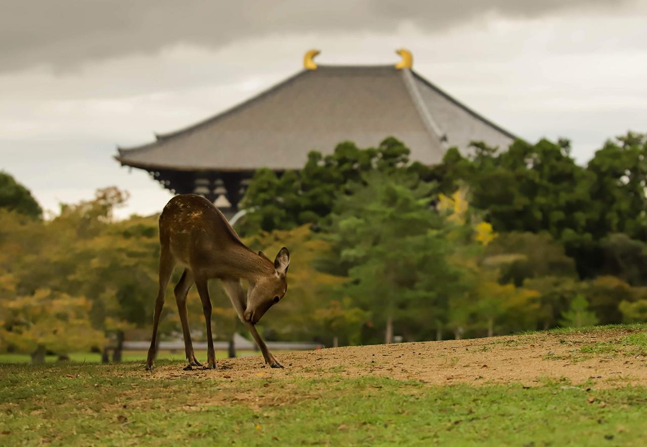 奈良市の風景写真