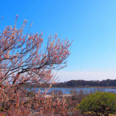 茨城県の風景写真