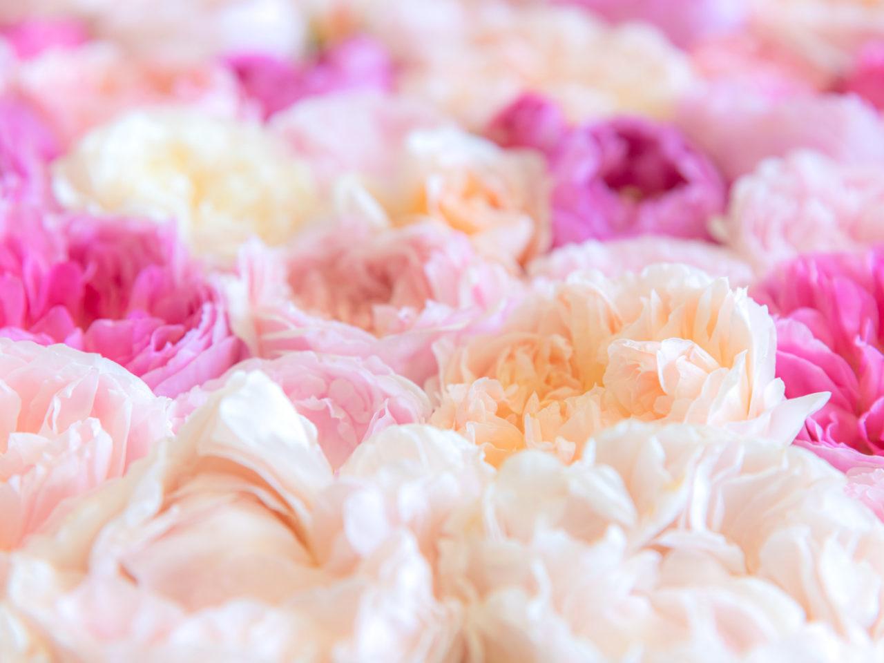 花&フラワーの特殊文字&記号コピーツール!可愛い特殊文字を気軽に使おう!のサムネイル画像
